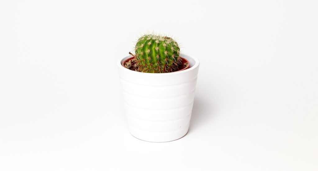 cactus 3952042 1920 1024x553 - Deine Minimalismuschallenge im Februar
